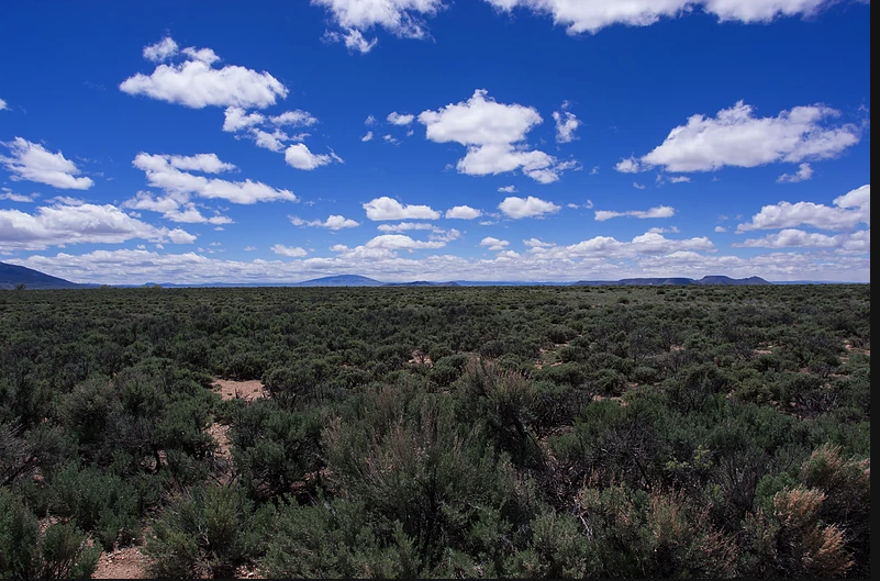 5 Acres near the Rio Grande RIver! $21 down. This is YOUR land!!!