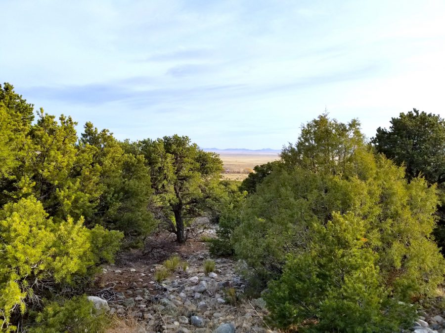 5 Acres COLORADO LAND With TREES! $149/month