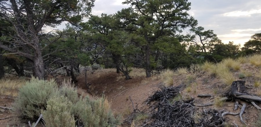 5 Acres in the CO Mountains with TREES!!! RARE-SDCR of Costilla County!