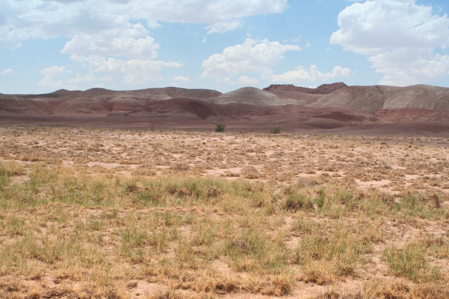 20 Acres in Holbrook Arizona-WELCOME TO JURASSIC PARK! Near Petrified Natl Forest!!!