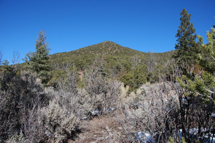Gorgeous 5+ Acre Colorado Property with Stunning Trees all over! SDCR at it's best!!!