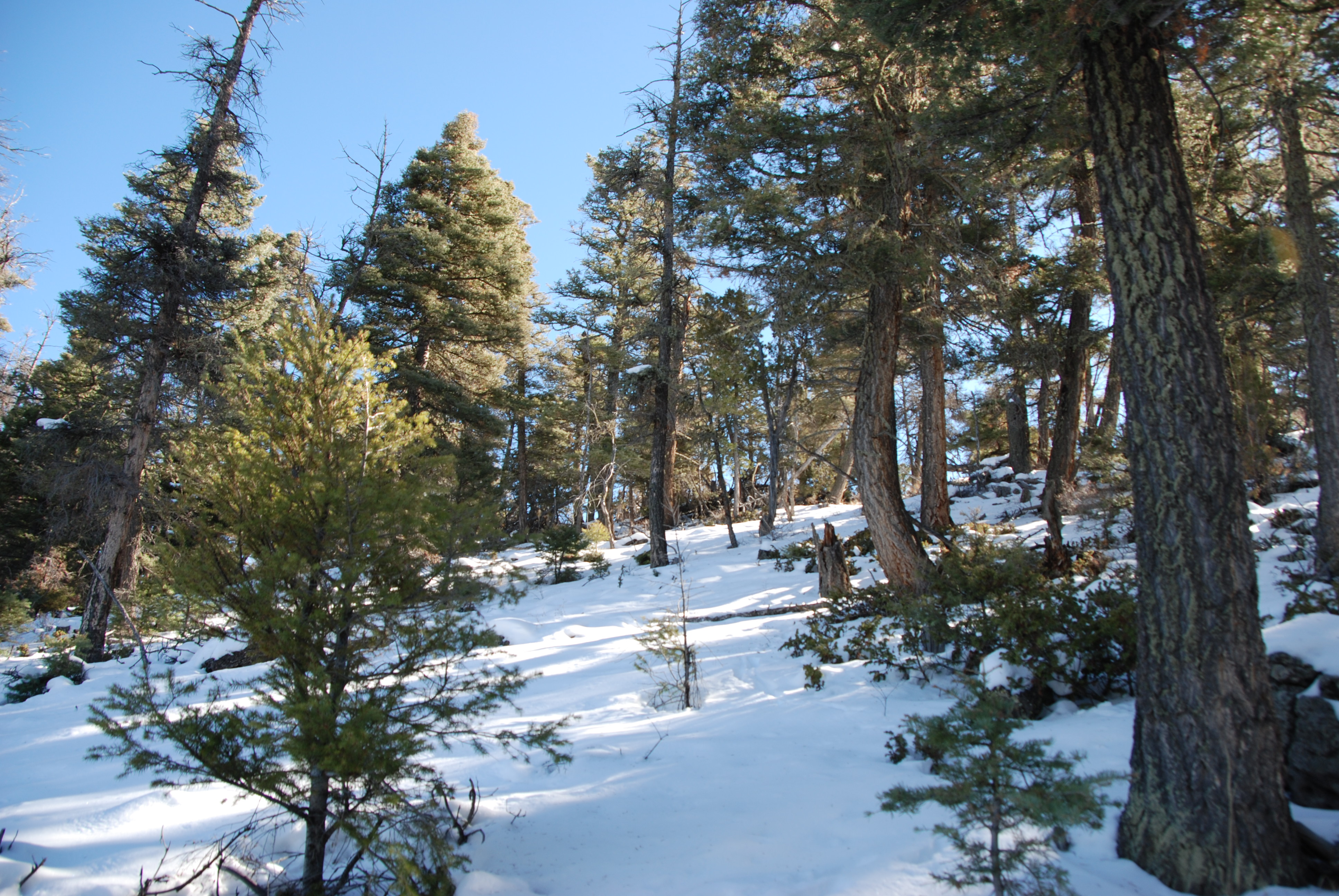 5.5 Acres in the Colorado Mountains! HUGE PINE TREES ON ...
