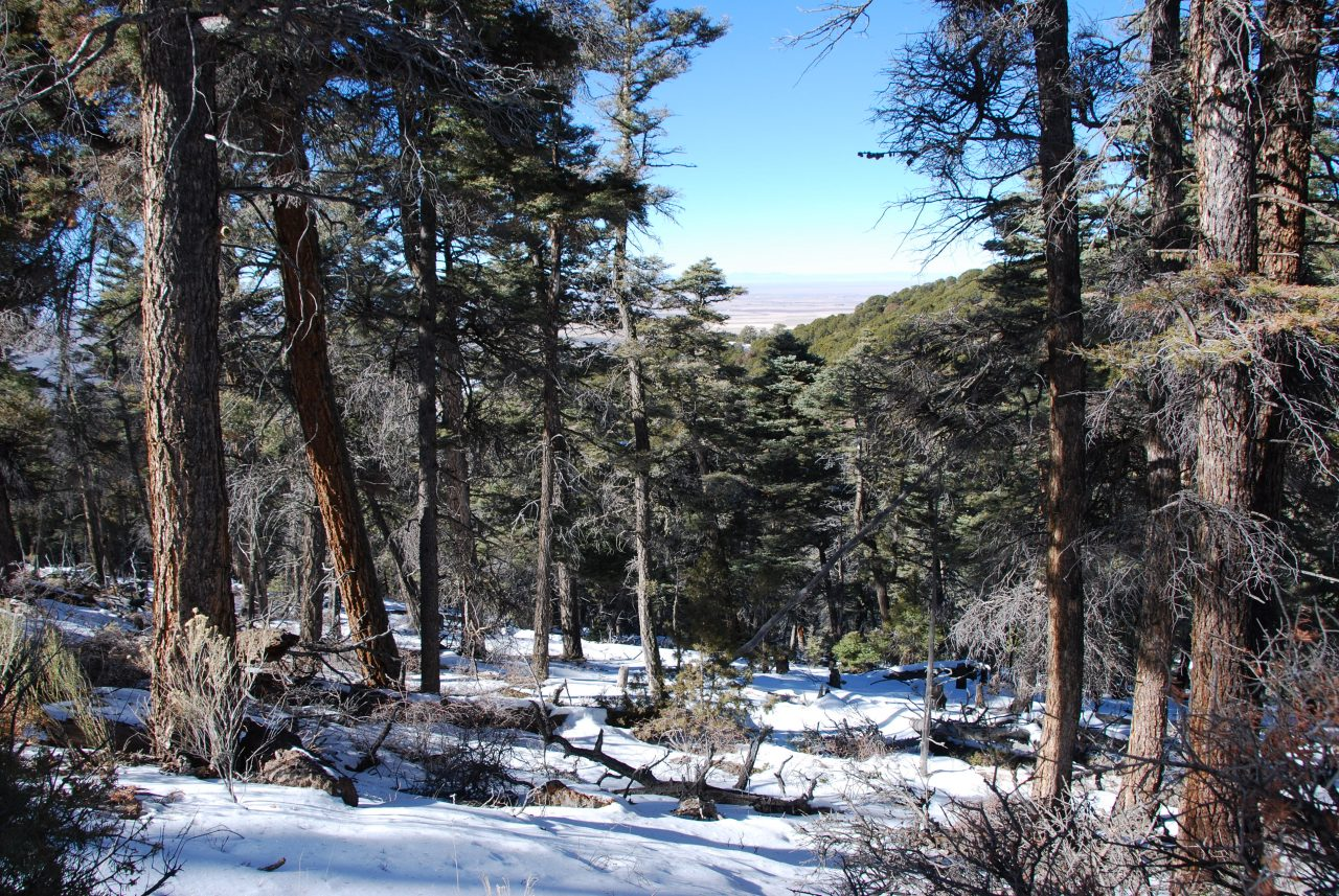 6 Gorgeous Acres in the Colorado Mountains-Lots of Large Trees on this one!