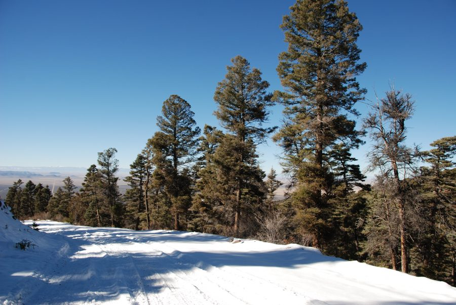 5.6 Acres LOADED with TREES in the Colorado Mountains!!!