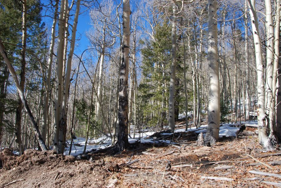 5.3 Acres of Stunning Colorado Mountain Land!! Aspens and Pine trees cover this one! Gorgeous!!
