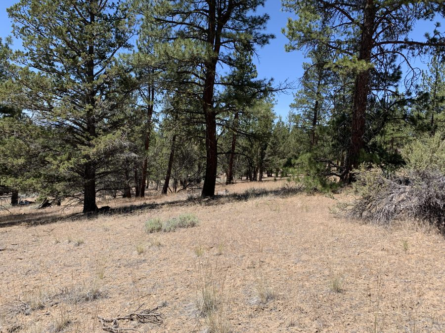 2.65 Acres in Klamath, OR-Loaded with large PINES -AND- VIEWS!!!!