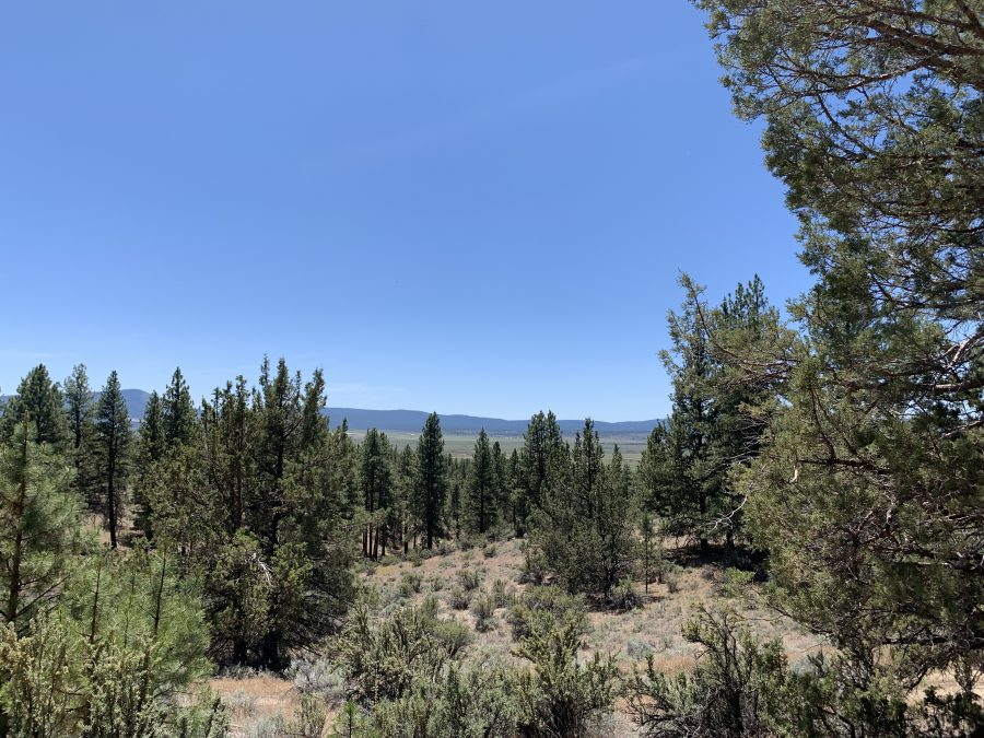 2.5 Acres in Klamath, Oregon-Gorgeous Views! Close to Beatty and Plenty of Trees