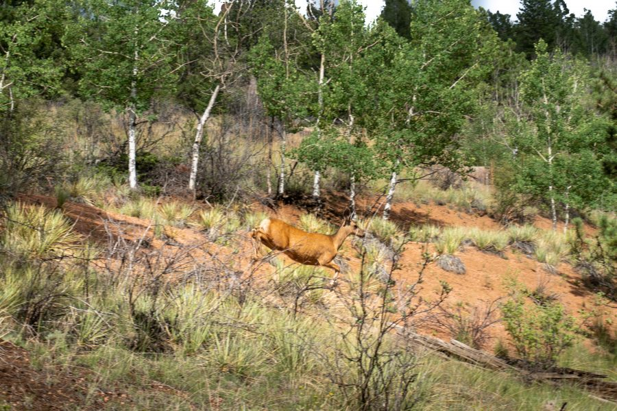 2 ACRES OF FULLY TREED PROPERTY IN TELLER, CO-POWER VERY CLOSE