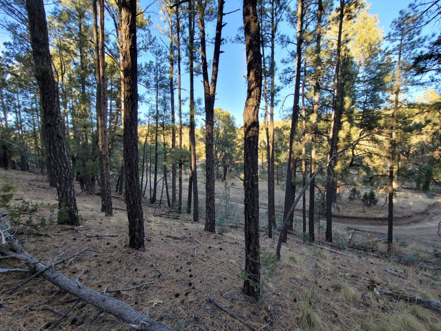 .664 Acres in OTERO, NEW MEXICO-TREES, WATER AND POWER NEARBY!