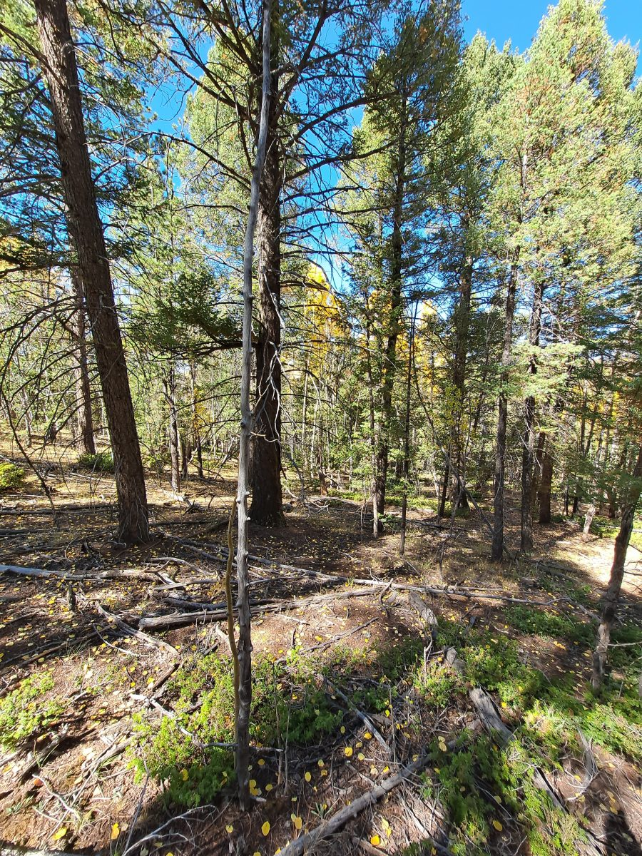 2 Acres with Trees in Teller, CO! POWER ON THE STREET!