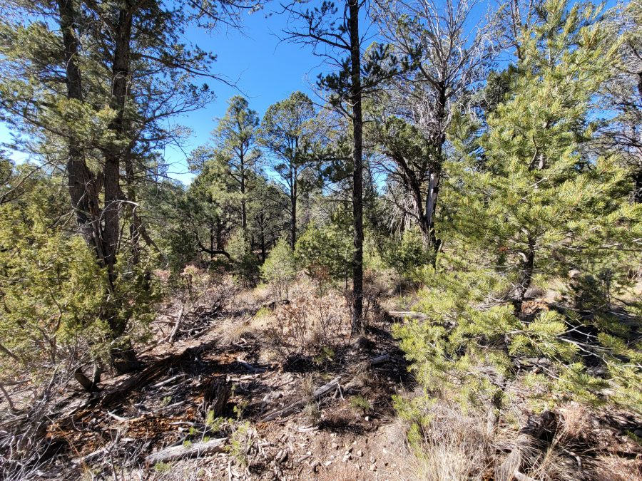 .588 Acres in OTERO, NEW MEXICO-TREES, WATER AND POWER AVAILABLE!