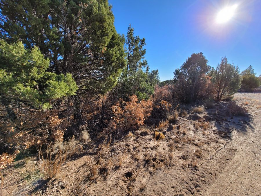.55 Acres in OTERO, NEW MEXICO-TREES, WATER AND POWER NEARBY!