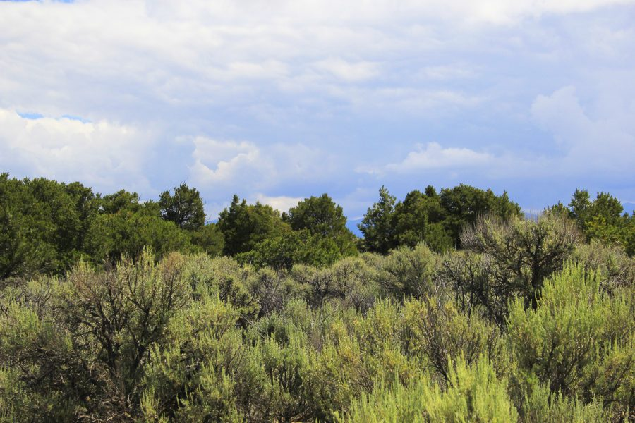 Vacation on 3.35-Acre in San Luis, Colorado Only $199 Monthly-Trees and Views!!